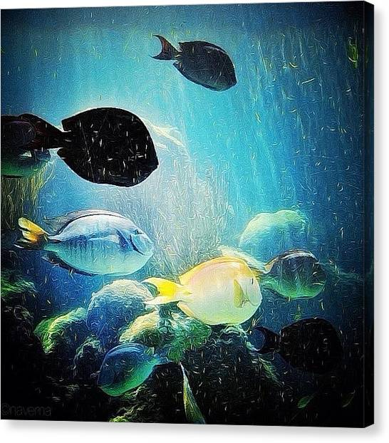Aquariums Canvas Print - Les Poissons by Natasha Marco
