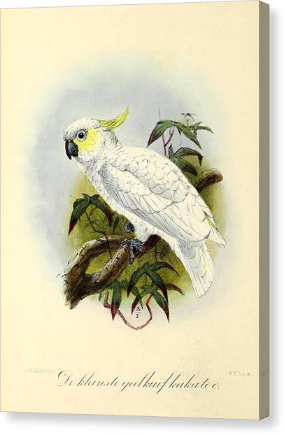 Cockatoo Canvas Print - Lesser Cockatoo by Dreyer Wildlife Print Collections