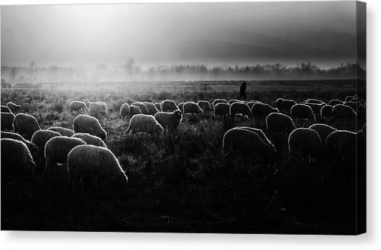 Farms Canvas Print - Let It Be Light! by Marius Cintez?