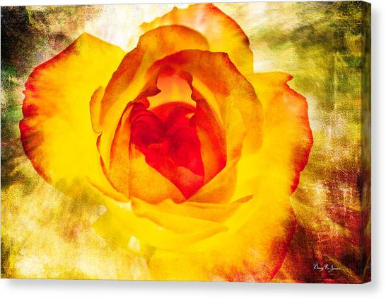 Floral - Rose - Let It Shine Canvas Print by Barry Jones