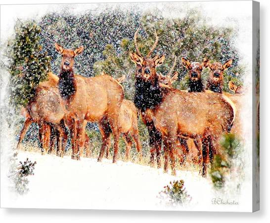Let It Snow - Barbara Chichester Canvas Print