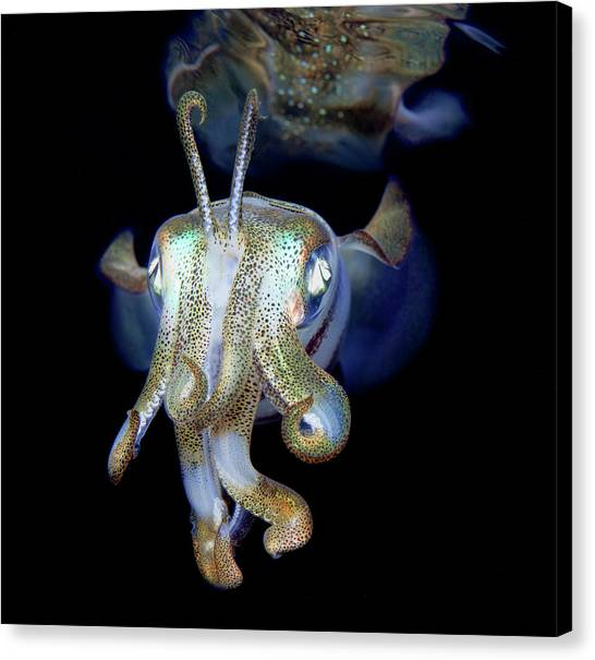 Squids Canvas Print - Let Me Introduce Myself - Little Ghost) by Andrey Narchuk