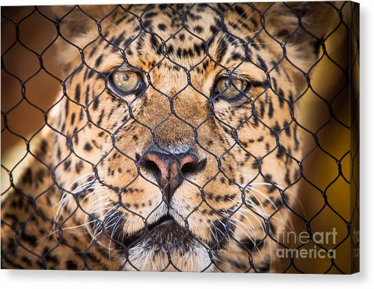 Let Me Out Canvas Print