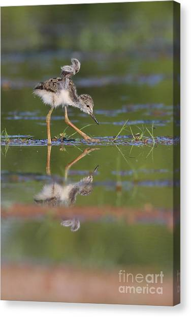 Let Me See Your Wings Canvas Print