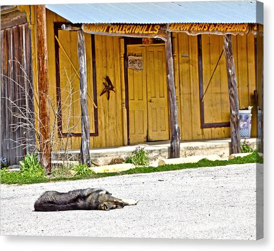 Let Sleeping Dogs Lie Canvas Print by Pattie Calfy