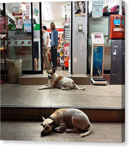 Canvas Print featuring the photograph Let Sleeping Dogs Lie Where They May by Mr Photojimsf