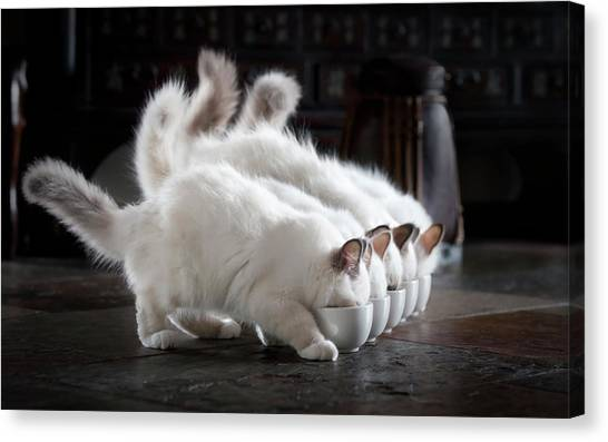 Kittens Canvas Print - Let There Be Milk by