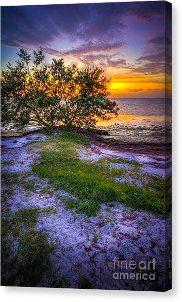 Mangrove Trees Canvas Print - Let's Keep Looking by Marvin Spates