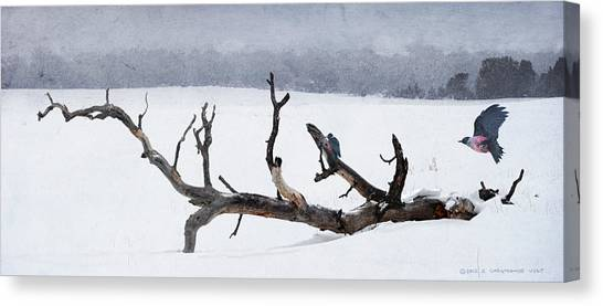 Letting Go  -  Lewis Woodpeckers Canvas Print by R christopher Vest