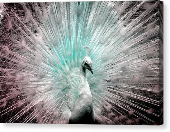 Leucistic White Peacock Canvas Print