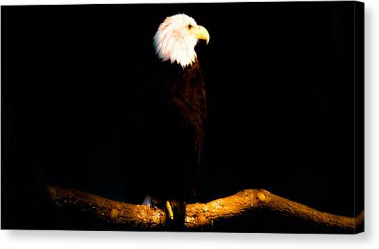 Liberty Canvas Print by Philip Zion