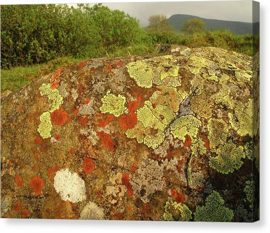 Pollution Canvas Print - Lichen Growing On Rock In Unpolluted Air by Cordelia Molloy