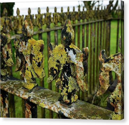 Pollution Canvas Print - Lichen On Iron Railings In Unpolluted Air by Cordelia Molloy