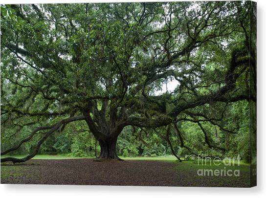 Lichgate Oak Canvas Print