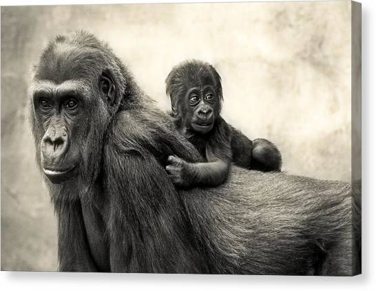 Apes Canvas Print - L.i.f.e. by Antje Wenner-braun