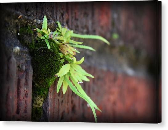 Canvas Print featuring the photograph Life Between The Bricks II by Kelly Hazel