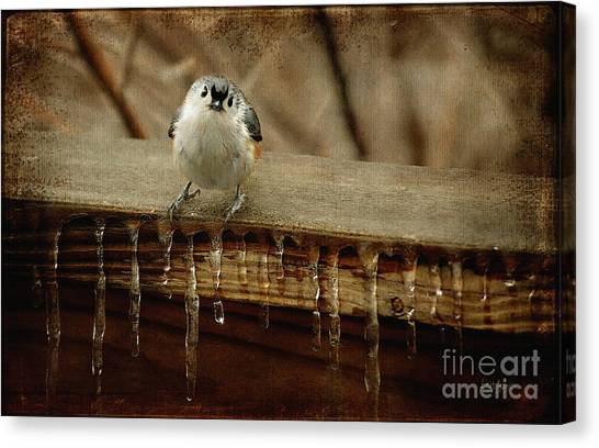 Titmouse Canvas Print - Life Can Be Tough by Lois Bryan