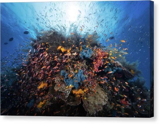 Coral Reefs Canvas Print - Life Explosion by Barathieu Gabriel