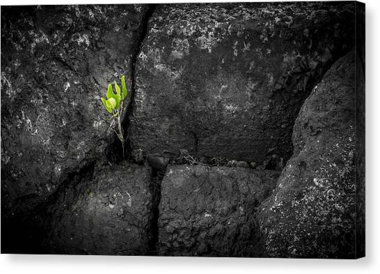 Mangrove Trees Canvas Print - Life Finds A Way by Marvin Spates