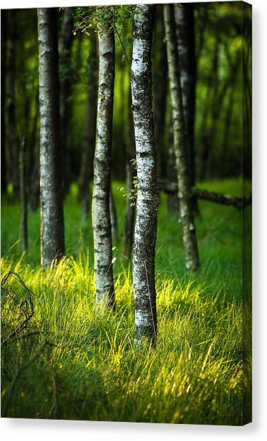 Life Is A Birch Canvas Print
