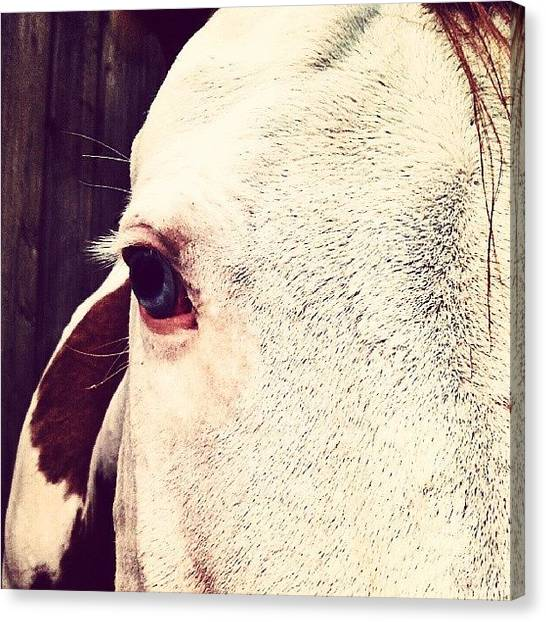 Horse Farms Canvas Print - Life Is Full Of Beauty. Notice It by Sarah Watson