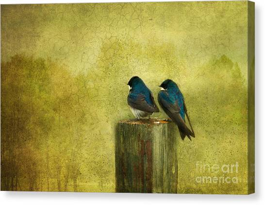 Swallow Canvas Print - Life Long Friends by Beve Brown-Clark Photography