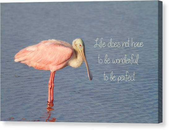 Spoonbills Canvas Print - Life Wonderful And Perfect by Kim Hojnacki