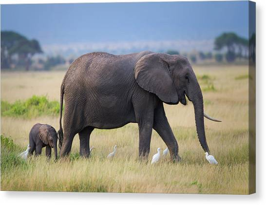 Kenyan Canvas Print - Life by Young Feng
