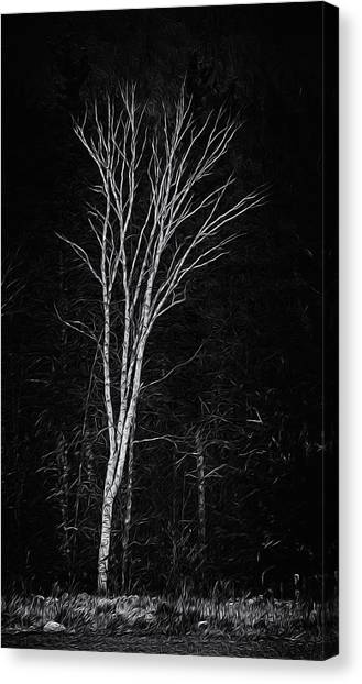 Life's A Birch No.2 Canvas Print