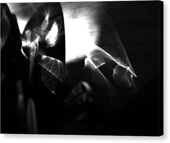 Light Filtering In Canvas Print by Tara Miller