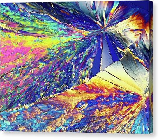 Biochemical Canvas Print - Light Micrograph Of Citric Acid Crystals by Alfred Pasieka