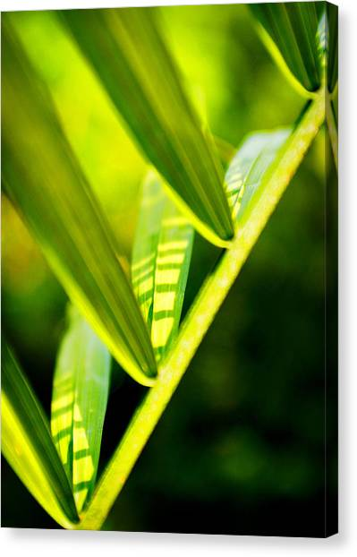 Light On Leaves Canvas Print