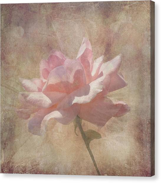 Light Pink Grunge Rose Canvas Print