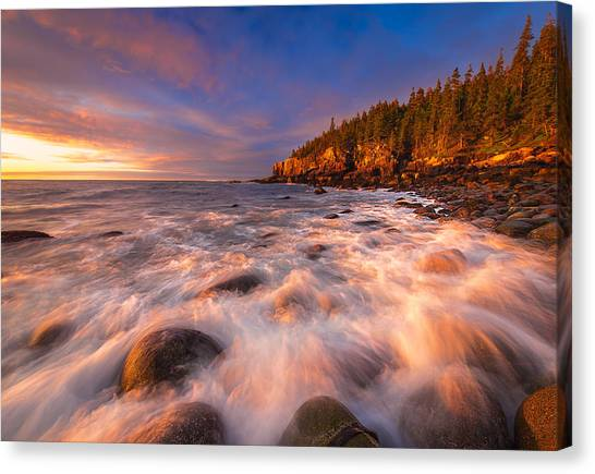 Otters Canvas Print - Light Surge by Joseph Rossbach