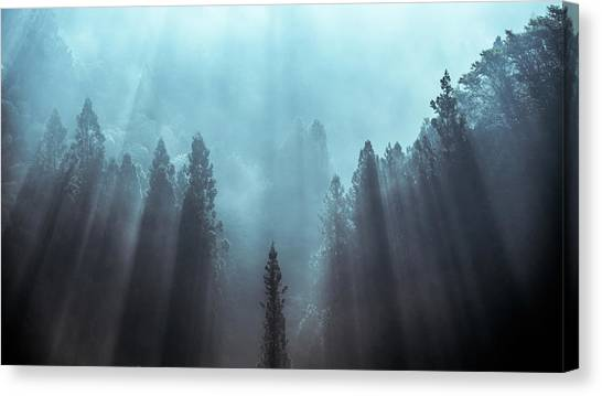 Foggy Forests Canvas Print - Light To Be Believed Likely by Tsuneya Fujii
