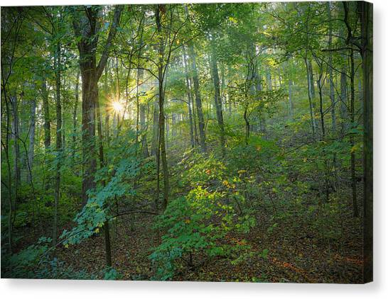 Light Up The Forest Canvas Print