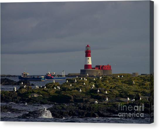 Lighthouse On The Farne Isands Northumberland Canvas Print