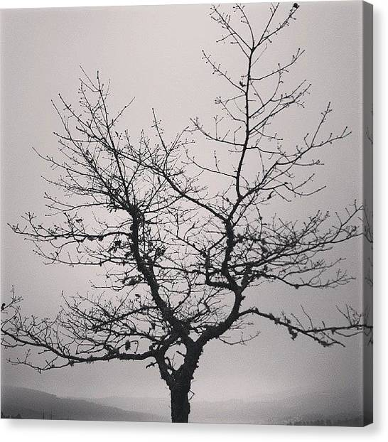 Frogs Canvas Print - Lightness Tree by Jose Barbosa