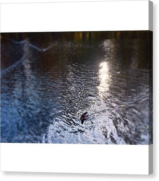 Wetlands Canvas Print - Lights Shadows On The by Walter Bisoffi