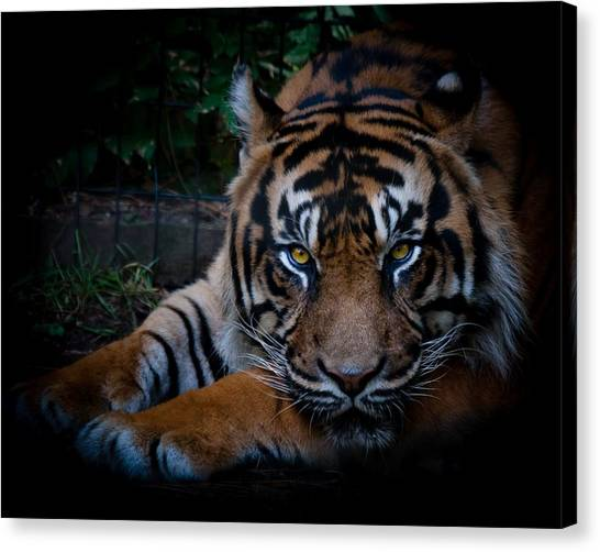 Like My Eyes? Canvas Print