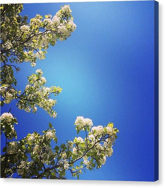 Popcorn Canvas Print - Like #popcorn #flowers In The #sky So by Audrey Park