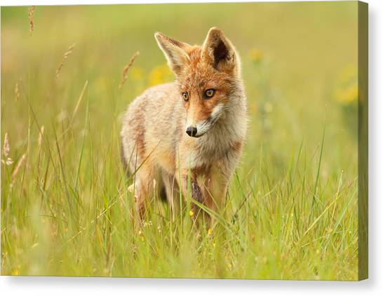 Flag Canvas Print - Lil' Hunter - Red Fox Cub by Roeselien Raimond