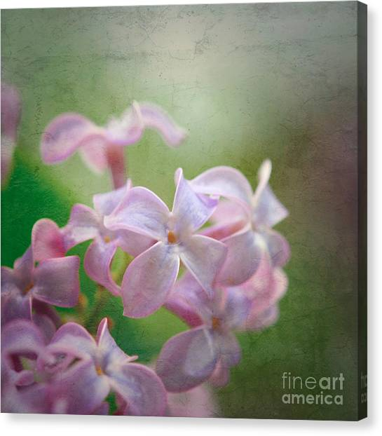 Lilac Dreaming  Canvas Print