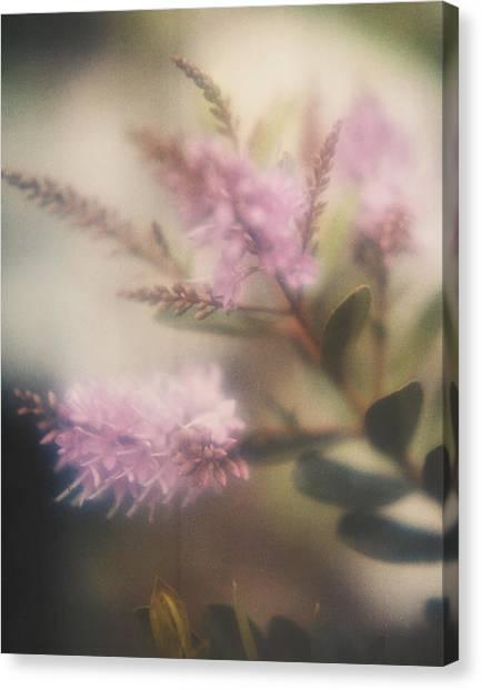95006 Lilac Canvas Print