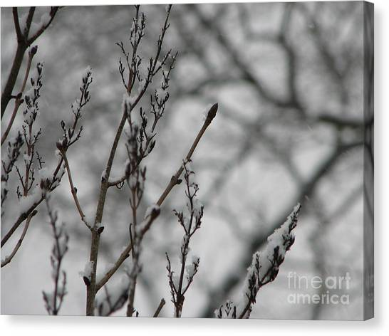 Lilac Frost Canvas Print by Roxy Riou