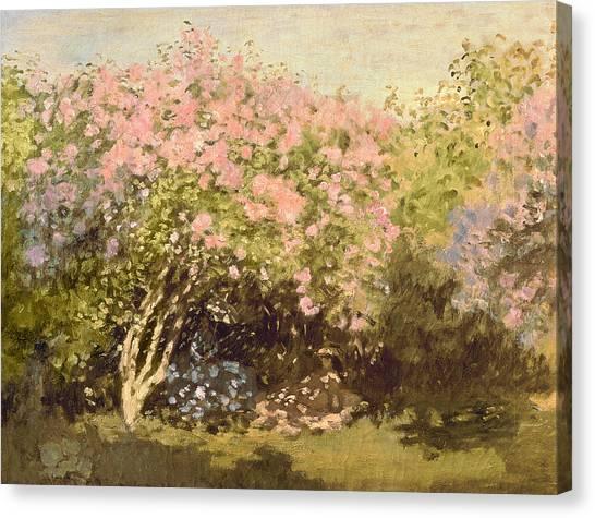 Lilac Bush Canvas Print - Lilac In The Sun, 1873 by Claude Monet