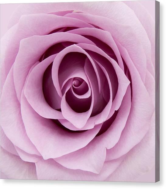 Lilac Rose Canvas Print