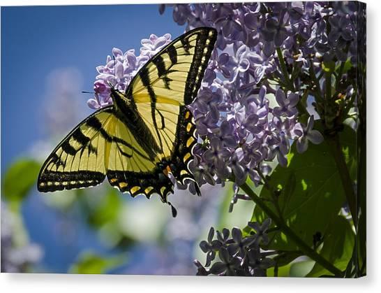 Lilac Tiger Canvas Print