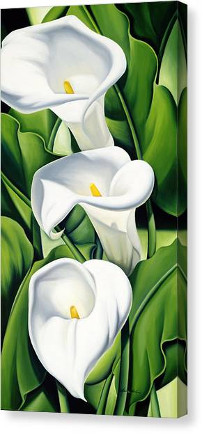 Lily Canvas Print - Lilies by Catherine Abel