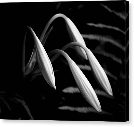 Marshes Canvas Print - Lilies Of The Marsh B/w by Marvin Spates